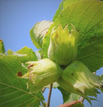 Razvoj ploda