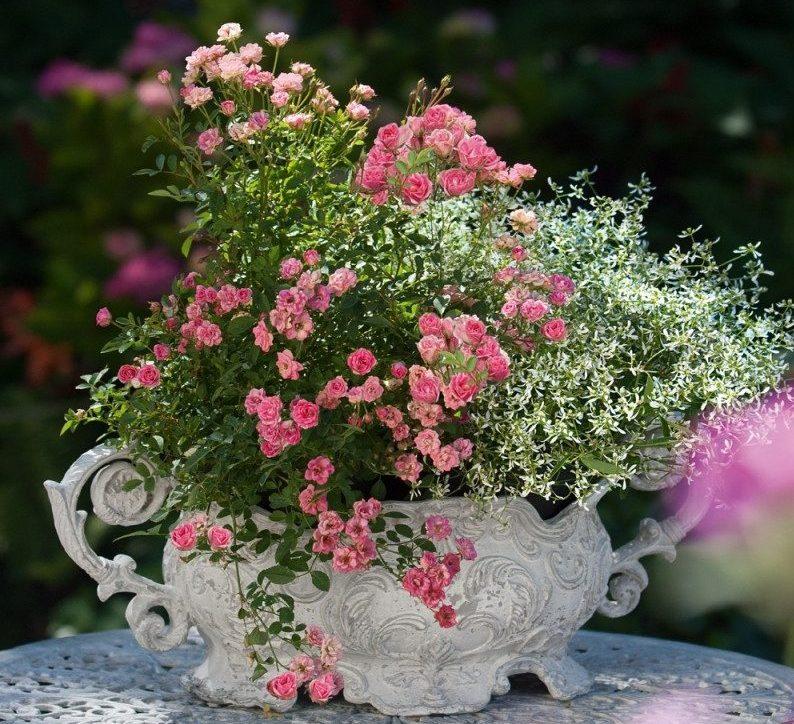Vrtnica Lily rose - namizna dekoracija